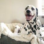 dog bed sizes