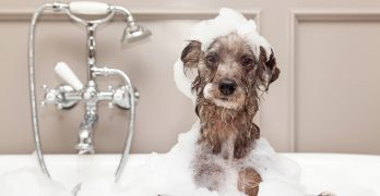 how to bathe a dog