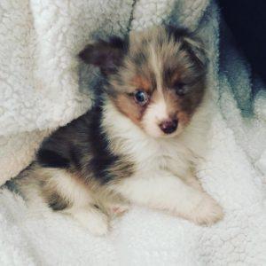 one-eyed puppy