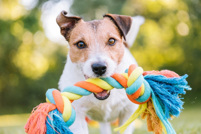 How to Pick the Best Dog Toys for Your Pet