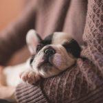 puppy checklist