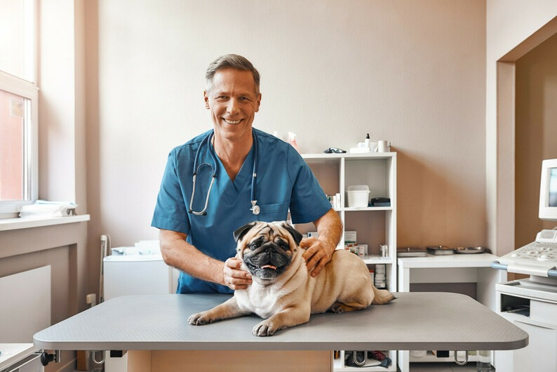 How to Choose the Best Veterinarian for Your Dog: Your Complete Guide