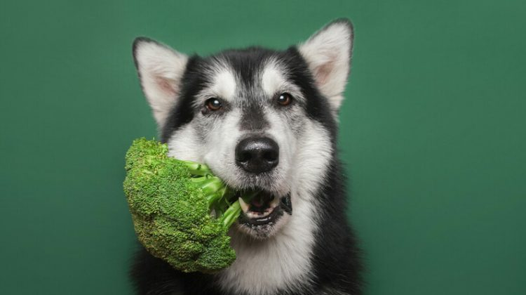 Can Dogs Be Vegetarian?