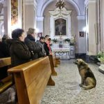 Dog Who Attends Church